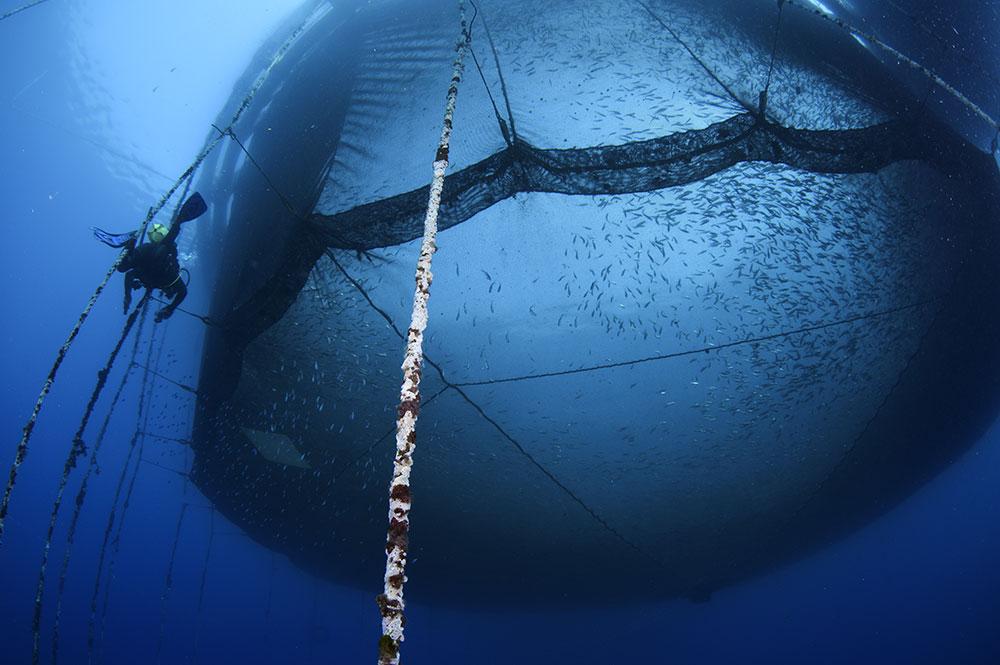 Fischnetz im Meer